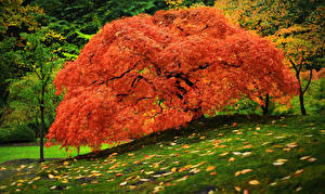 Фотография Осень Парки Деревья Траве Листва Оранжевые Природа