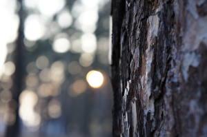 Фото Крупным планом Ствол дерева Природа