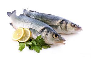 Обои Морепродукты Рыба Лимоны Двое Еда фото