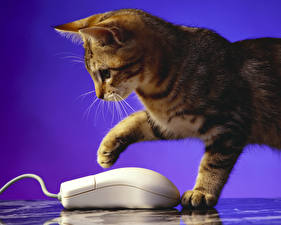 Фотографии Коты Компьютерная мышь животное