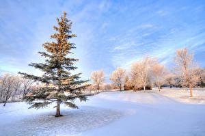 Фотография Парки Небо Зима Пейзаж Снега Ель Дерева Природа