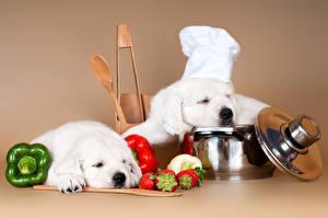 Картинка Собака Перец овощной Клубника 2 Ретривер Шапка Животные