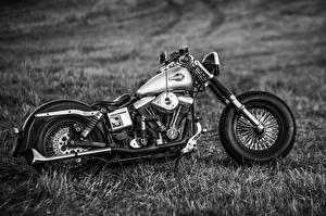Фото Harley-Davidson Трава