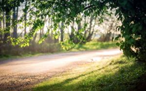 Картинки Дороги Леса Трава Ветвь Листва Природа
