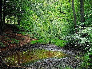 Фото Леса Дерево Лужа Природа
