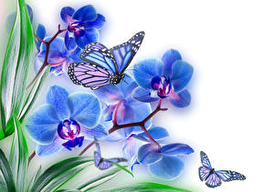 Фото Орхидея Бабочка Вблизи Насекомые Синие Природа Животные