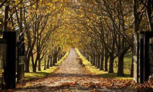 Фото Осенние Парки Дороги Деревья Листья Аллея Природа