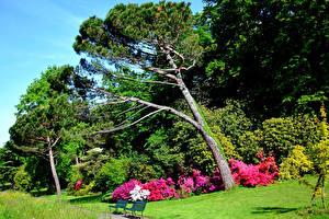 Фото Швейцария Парки Рододендрон Дерево Траве Скамья Parc du Denantou Lausanne Природа