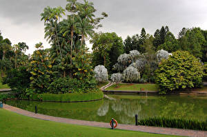 Фотографии Сингапур Сады Пруд Пальм Газоне Botanic Gardens Природа
