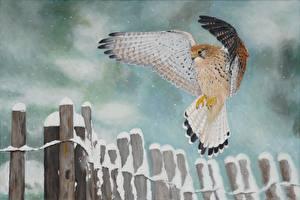 Фотография Рисованные Ястреб Птицы Зима Крылья Снег Забора Животные
