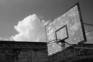Фотография Баскетбол Спорт