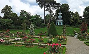 Картинка Франция Сады Розы Париже Газон Кусты Bagatelle Rose Garden Природа