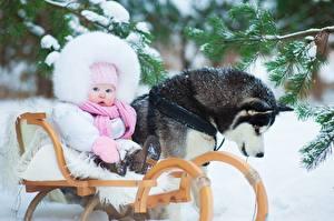 Фотографии Собаки Зима Младенца Хаски Снег Дети Животные