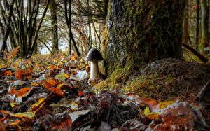 Фото Грибы природа Осенние Леса Вблизи Листья Мха HDRI