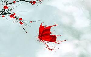 Фото Рисованные Бабочки Красная Животные