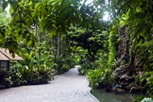 Обои Сингапур Парки Деревьев Природа
