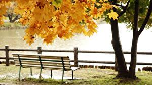Картинки Пруд Осень Парки Скамейка Деревья Листва Природа
