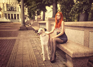 Картинки Собаки Борзые Рыжая Скамейка Улица Сидит Девушки Животные