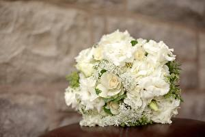 Фотография Гортензия Роза Букеты Крупным планом Праздники Белых Свадьбы Цветы