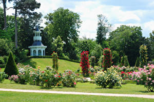 Картинки Франция Сады Роза Париж Кусты Газон Bagatelle Rose Garden Природа