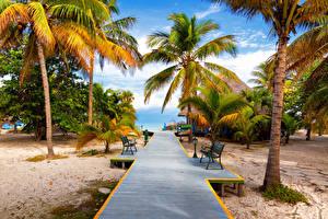 Фотография Тропики Пальма Пляж Скамья Песке Природа