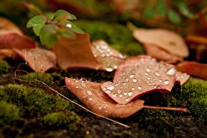 Картинка Крупным планом Осенние Листва Капли Мха Природа