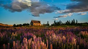 Картинки Здания Луга Небо Люпин Облако Природа