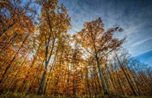 Картинки Рассветы и закаты Времена года Осенние Деревья Природа
