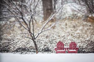 Фото Парки Зима Дерево Скамья Снег Природа