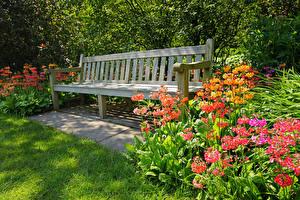 Фотографии Сады Скамья Траве Природа Цветы