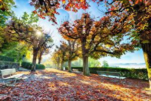 Фотографии Осенние Парки Улице Деревьев Лист Скамья Лучи света Природа