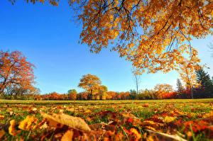 Фото Осень Небо Деревья Листья Трава Природа