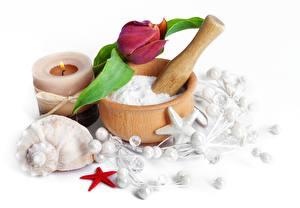 Картинка Тюльпан Ракушки Свечи Морские звезды Вблизи Спа Ступка с пестиком Цветы