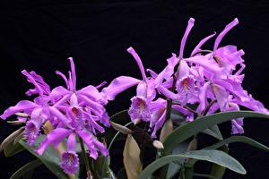 Фото Орхидея Вблизи Фиолетовых Цветы