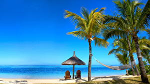 Картинки Море Тропики Небо Пальмы Пляж Зонт Шезлонг Природа
