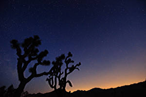 Фотография Звезды Небо Ночные Деревья Космос Природа