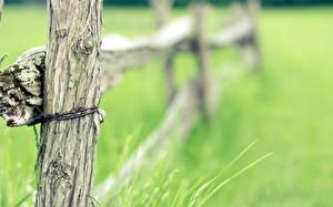 Обои Вблизи Ограда Трава Природа