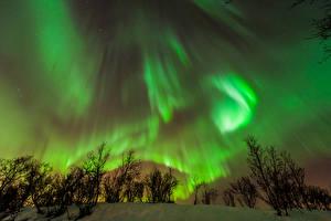 Фотографии Небо Зимние Снег Кусты Ночные Северное сияние Природа