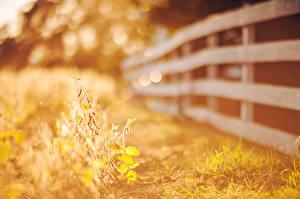 Фото Ограда Трава Листья Природа