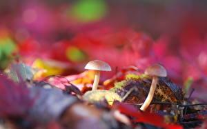 Фотографии Грибы природа Вблизи Листья