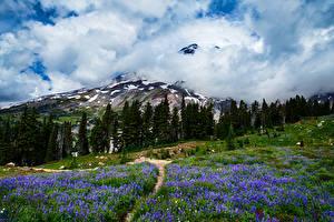 Фото Горы Луга Штаты Пейзаж Облако Трава Маунт-Рейнир парк