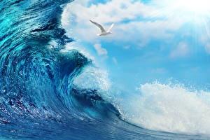 Обои Море Чайки Волны Небо Облака Природа Животные