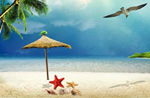 Картинка Чайка Морские звезды Ракушки Небо Море Пляж Зонт Песок Пальмы Природа Животные