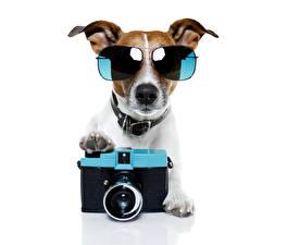 Обои Собаки Джек-рассел-терьер Очки Фотокамера Смешные Фотограф Животные
