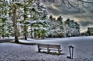 Фото Зима Леса Скамейка Дерево Снеге HDR Природа