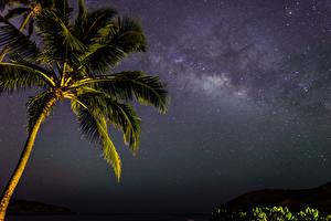 Обои Небо Звезды Млечный Путь Пальмы Ночь Природа