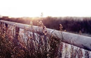 Фото Вблизи Забор Трава Природа