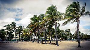 Обои США Майами Флорида Пальмы Города Природа фото