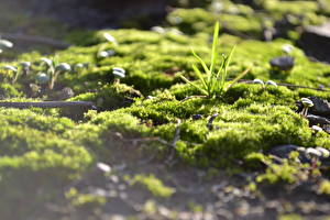 Фотографии Вблизи Трава Мха Природа