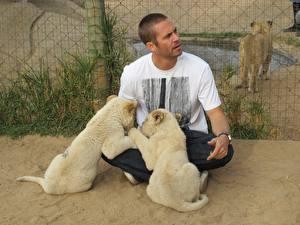Фотографии Детеныши Лев Большие кошки Paul Walker Знаменитости Животные